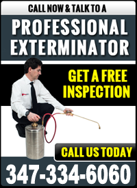 NYC Pest Control Company Reviews | Mite Buster Testimonials - cta