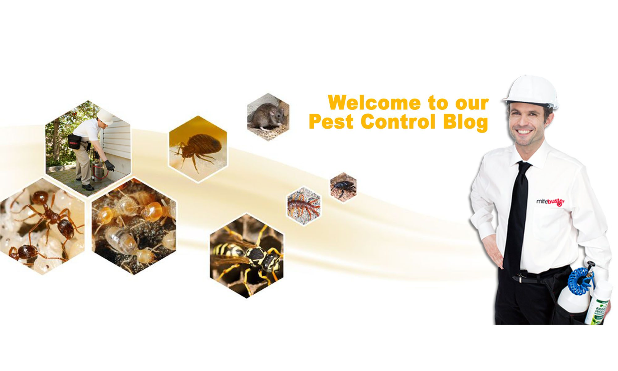 Brooklyn and Queens Pest Control Blog